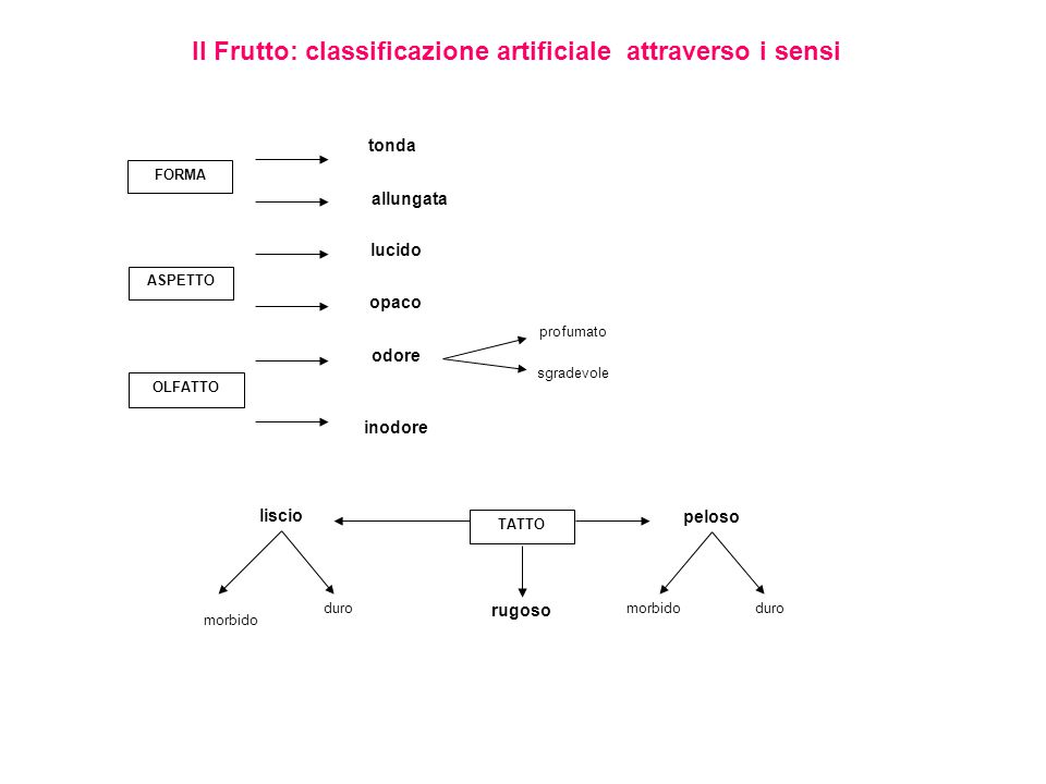 Il Frutto: classificazione artificiale attraverso i sensi