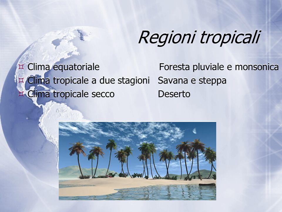 Regioni tropicali Clima equatoriale Foresta pluviale e monsonica