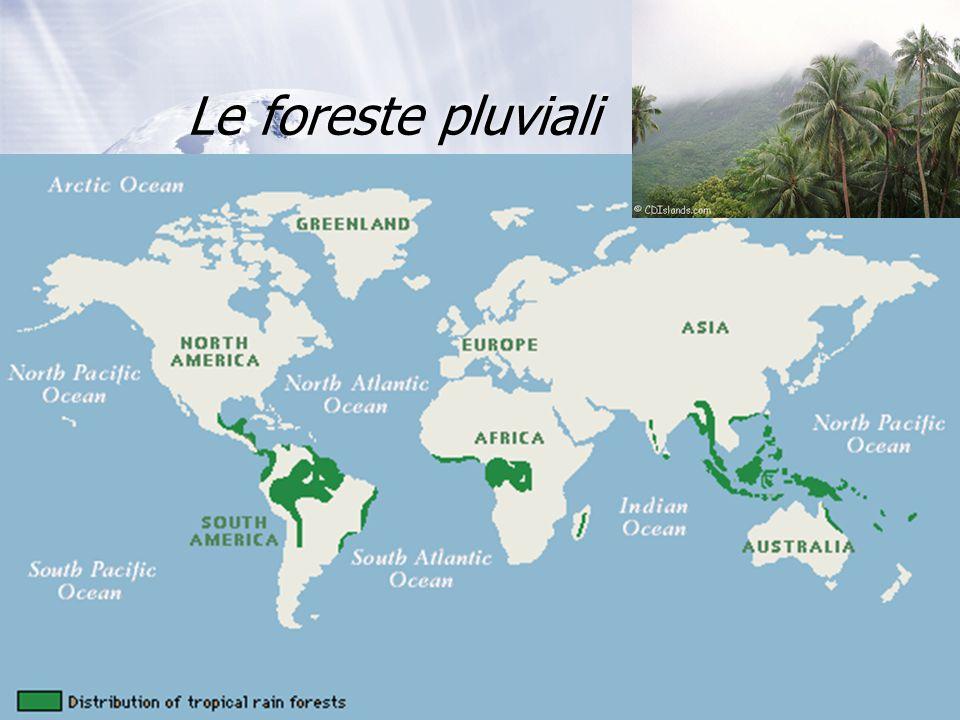 Le foreste pluviali