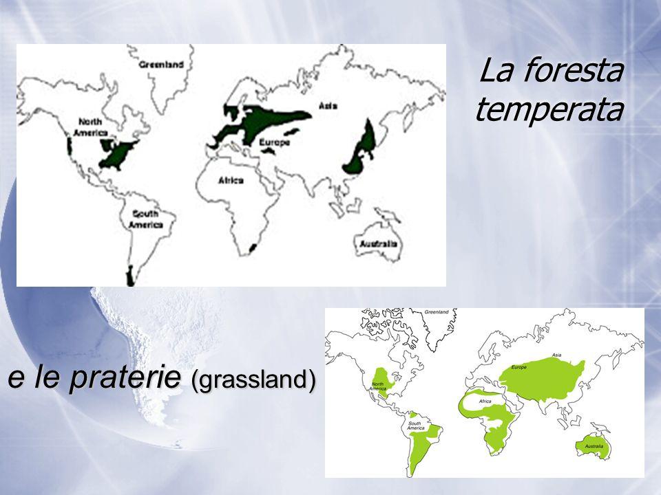 La foresta temperata e le praterie (grassland)