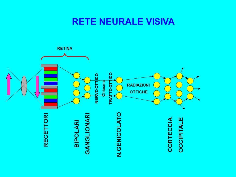 RETE NEURALE VISIVA GANGLIONARI BIPOLARI RECETTORI CORTECCIA