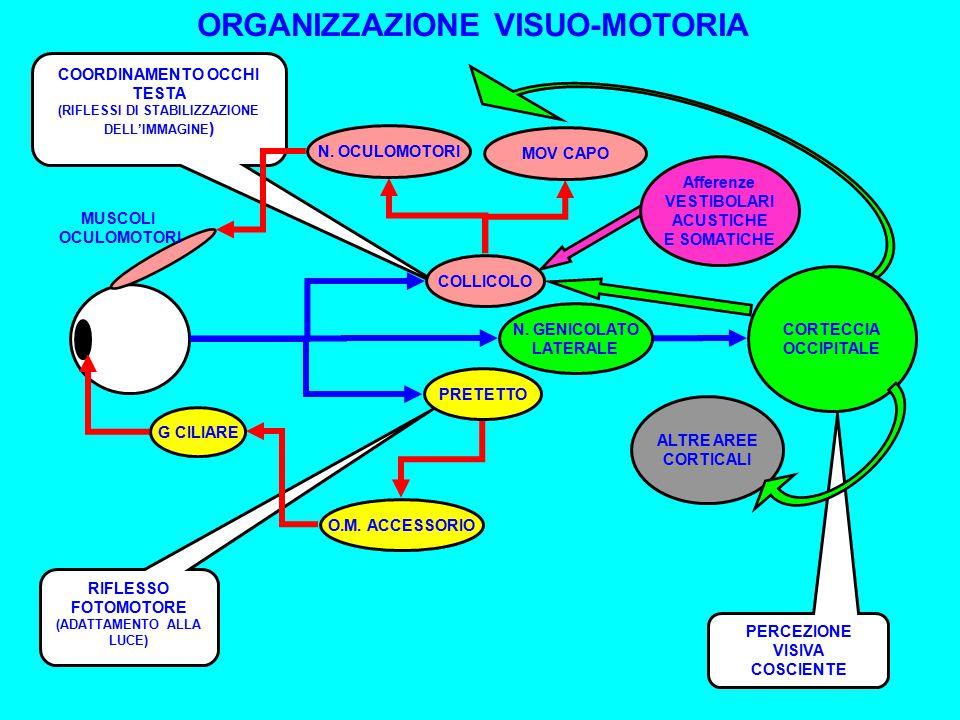 ORGANIZZAZIONE VISUO-MOTORIA