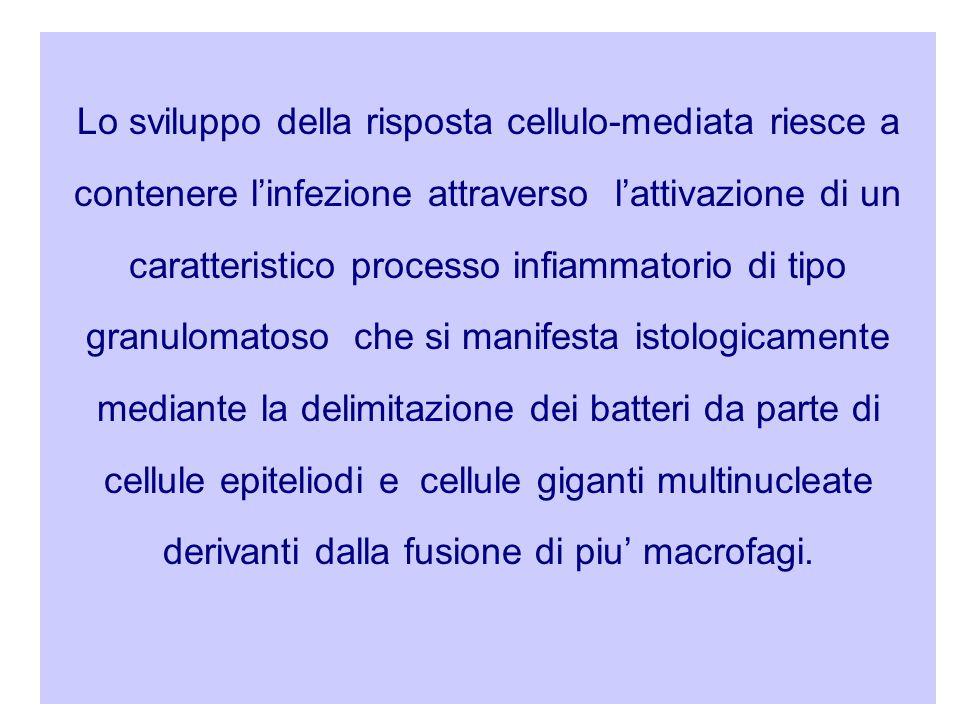 Lo sviluppo della risposta cellulo-mediata riesce a contenere l'infezione attraverso l'attivazione di un caratteristico processo infiammatorio di tipo granulomatoso che si manifesta istologicamente mediante la delimitazione dei batteri da parte di cellule epiteliodi e cellule giganti multinucleate derivanti dalla fusione di piu' macrofagi.