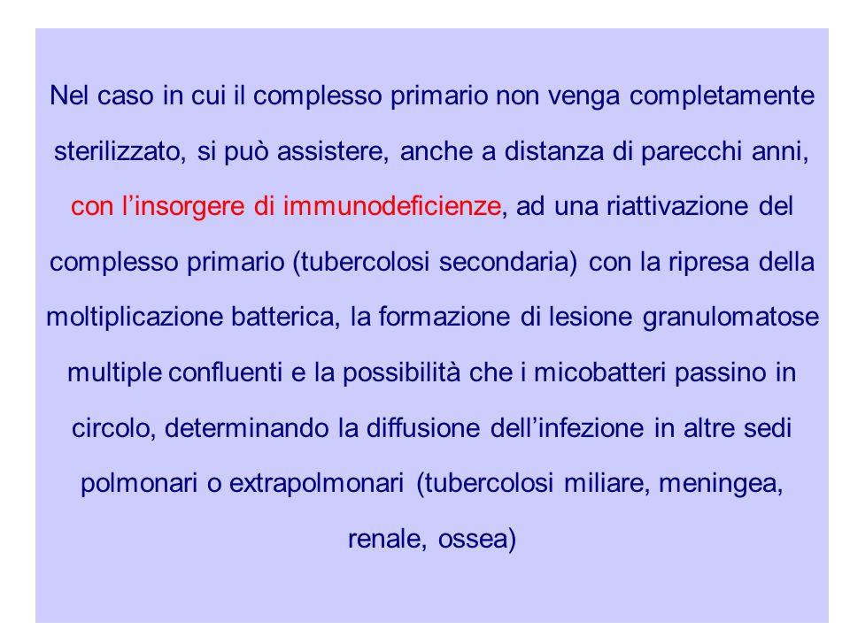 Nel caso in cui il complesso primario non venga completamente sterilizzato, si può assistere, anche a distanza di parecchi anni, con l'insorgere di immunodeficienze, ad una riattivazione del complesso primario (tubercolosi secondaria) con la ripresa della moltiplicazione batterica, la formazione di lesione granulomatose multiple confluenti e la possibilità che i micobatteri passino in circolo, determinando la diffusione dell'infezione in altre sedi polmonari o extrapolmonari (tubercolosi miliare, meningea, renale, ossea)