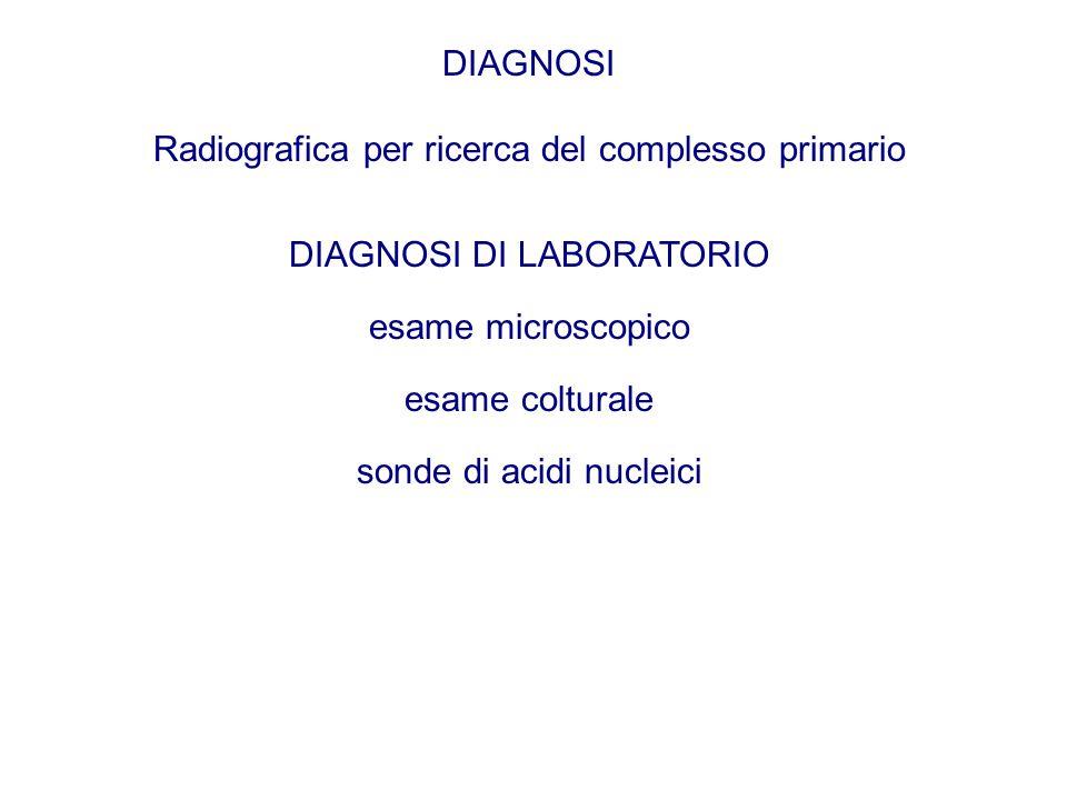 Radiografica per ricerca del complesso primario