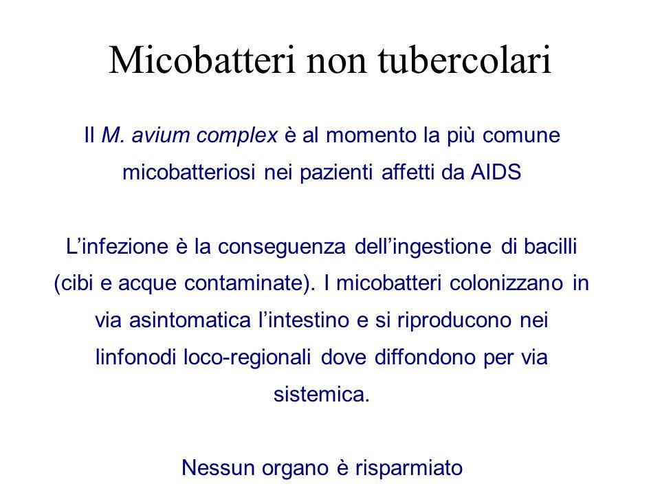 Micobatteri non tubercolari