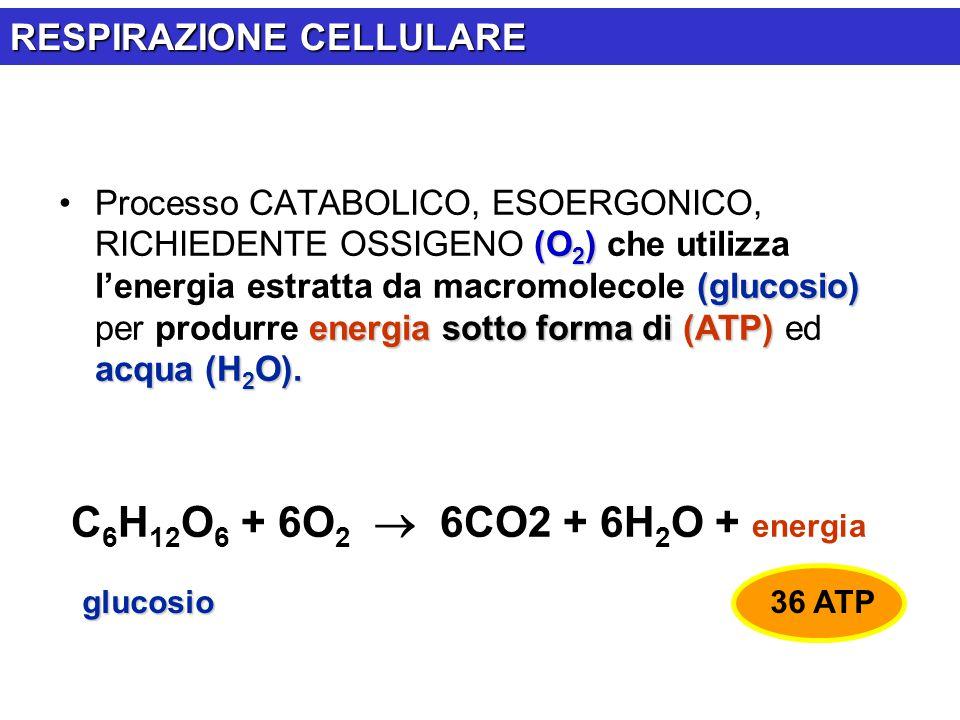 C6H12O6 + 6O2  6CO2 + 6H2O + energia RESPIRAZIONE CELLULARE