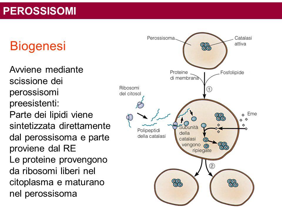 Biogenesi PEROSSISOMI