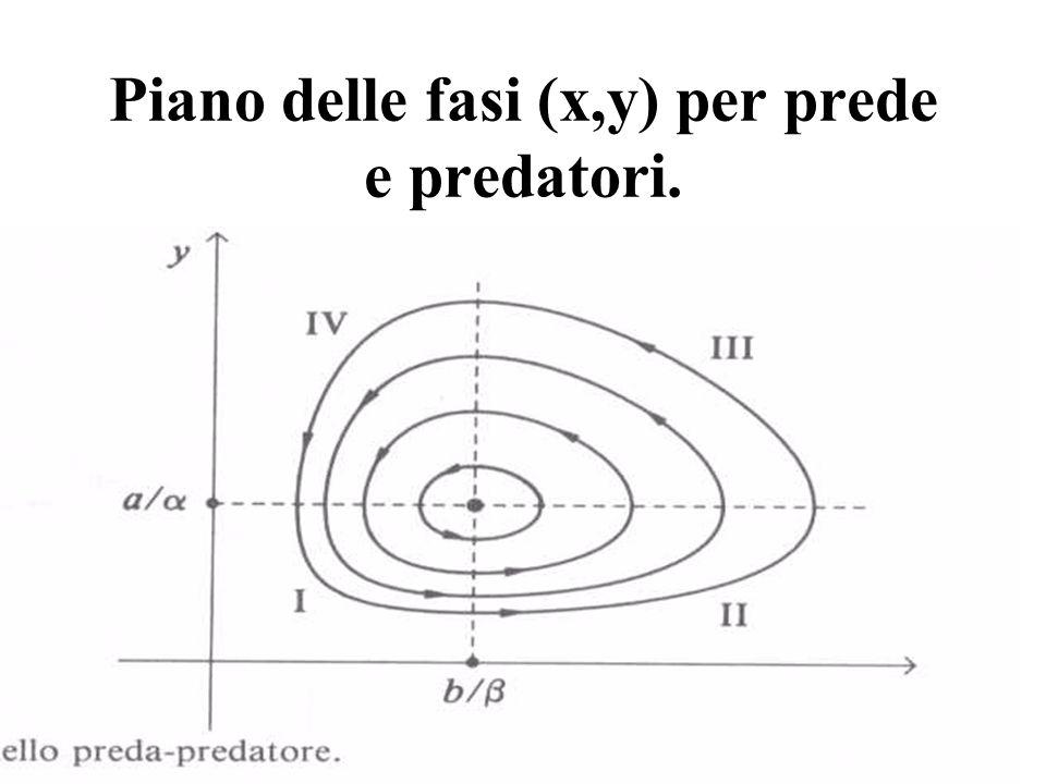 Piano delle fasi (x,y) per prede e predatori.