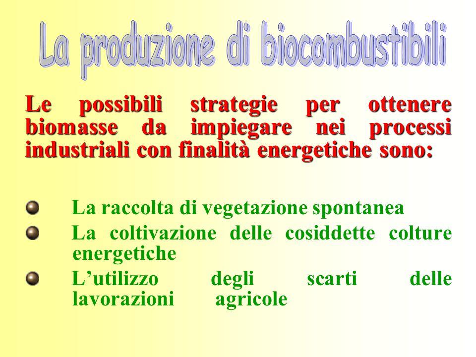 La produzione di biocombustibili