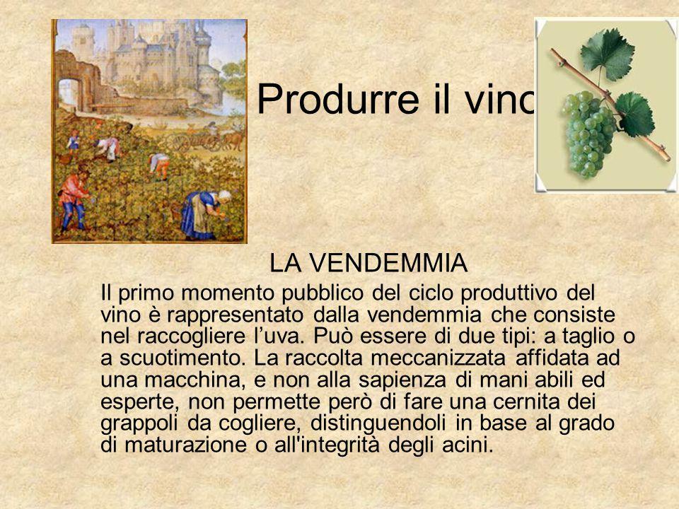 Produrre il vino LA VENDEMMIA