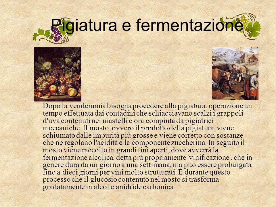 Pigiatura e fermentazione