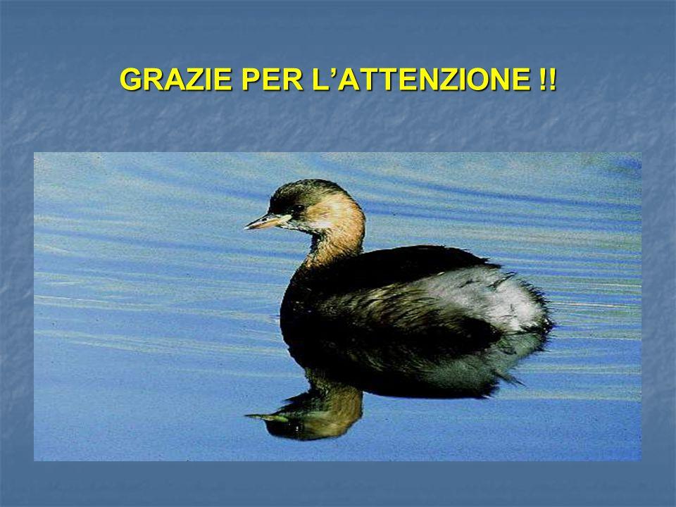 GRAZIE PER L'ATTENZIONE !!