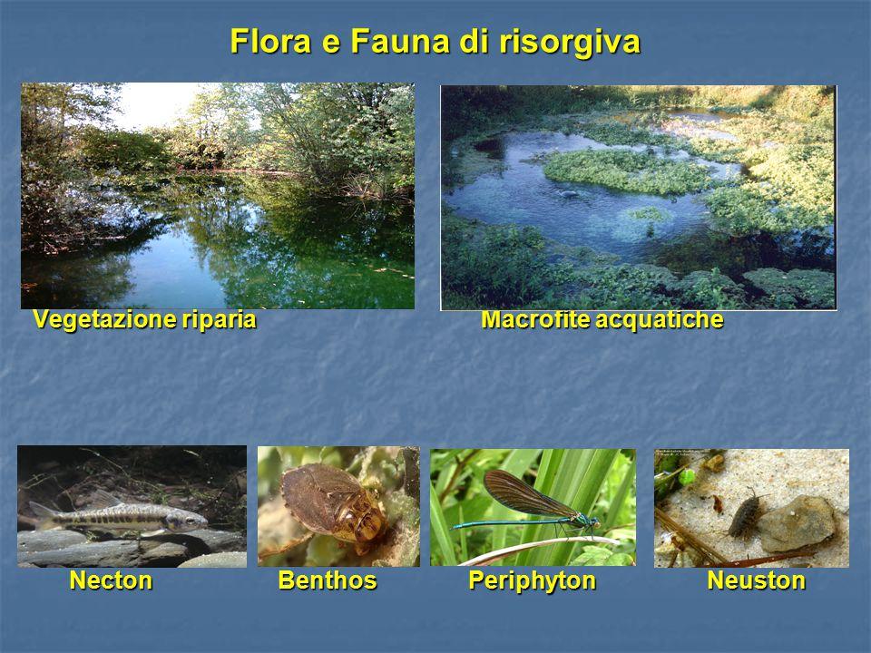 Flora e Fauna di risorgiva