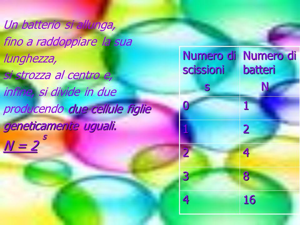 N = 2 Un batterio si allunga, fino a raddoppiare la sua lunghezza,