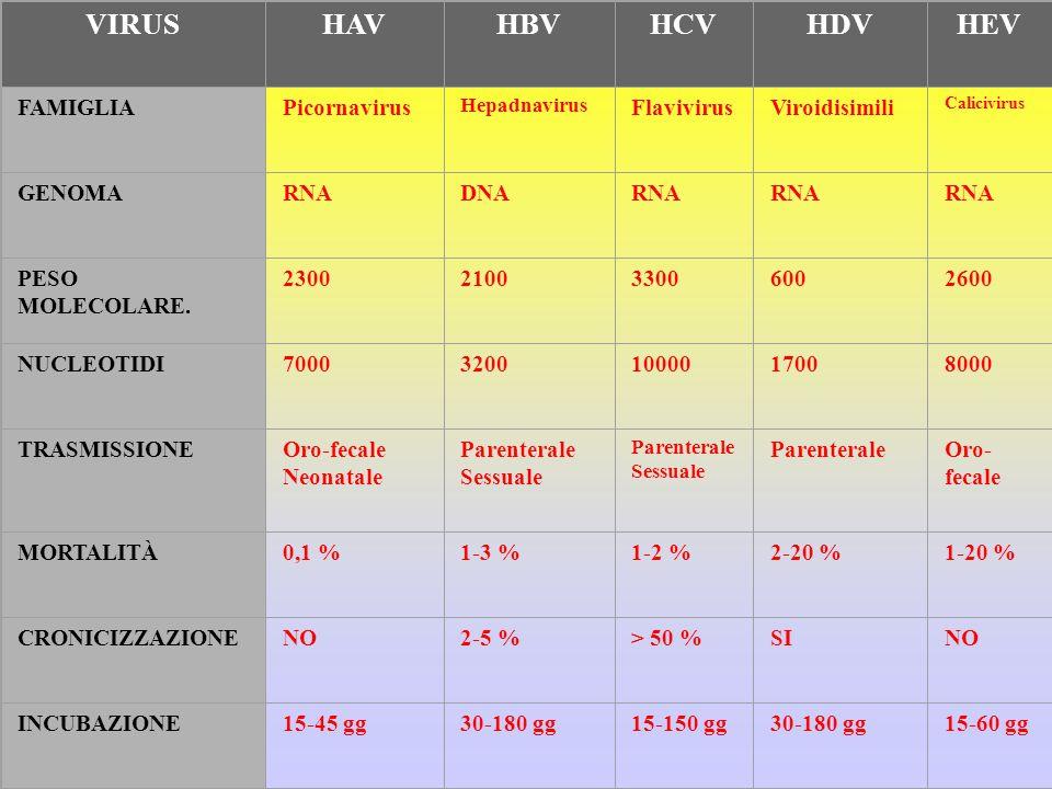 VIRUS HAV HBV HCV HDV HEV FAMIGLIA Picornavirus Flavivirus