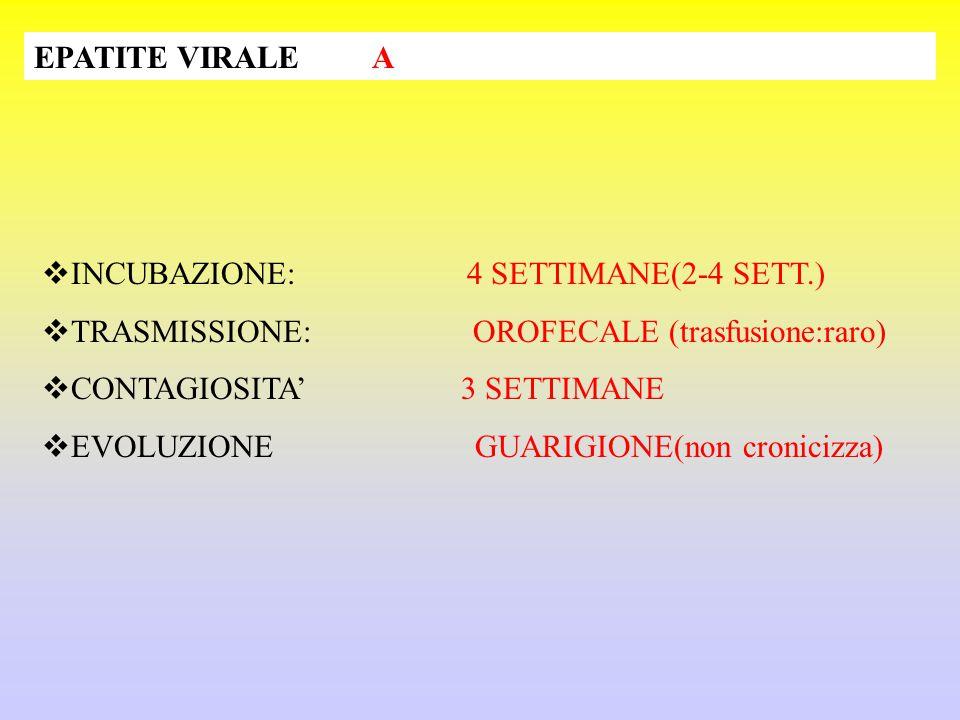 EPATITE VIRALE A INCUBAZIONE: 4 SETTIMANE(2-4 SETT.) TRASMISSIONE: OROFECALE (trasfusione:raro)