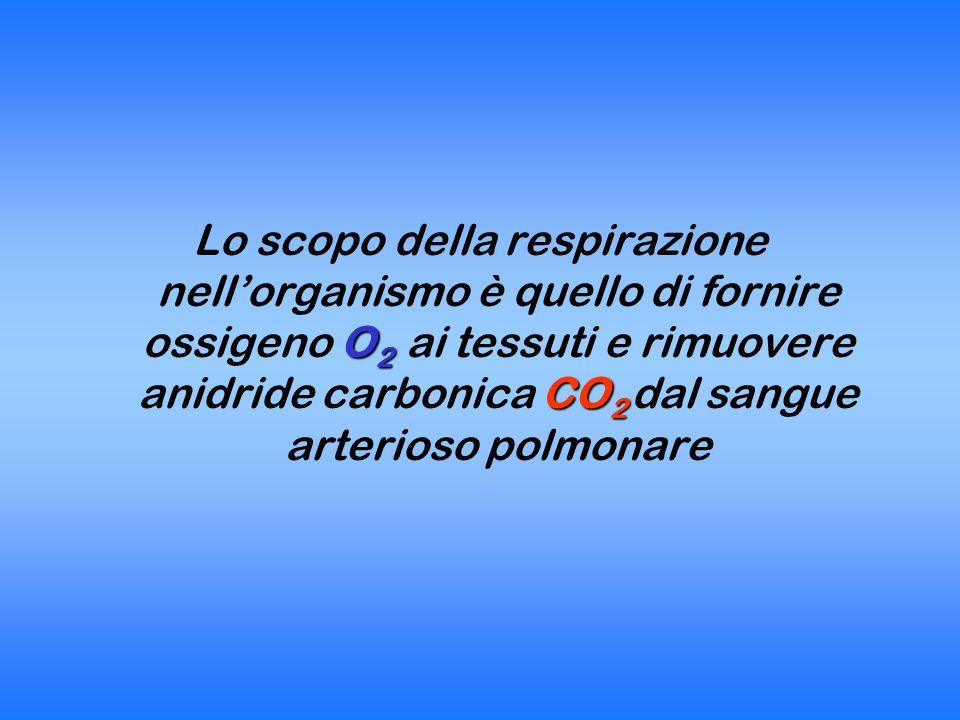 Lo scopo della respirazione nell'organismo è quello di fornire ossigeno O2 ai tessuti e rimuovere anidride carbonica CO2 dal sangue arterioso polmonare