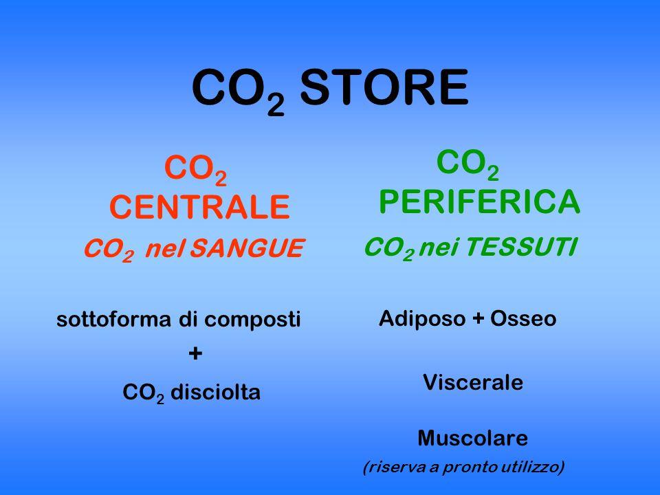 CO2 STORE CO2 PERIFERICA CO2 CENTRALE CO2 nei TESSUTI CO2 nel SANGUE +