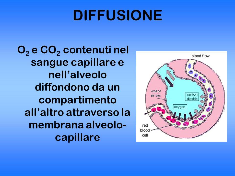 DIFFUSIONE O2 e CO2 contenuti nel sangue capillare e nell'alveolo diffondono da un compartimento all'altro attraverso la membrana alveolo-capillare.