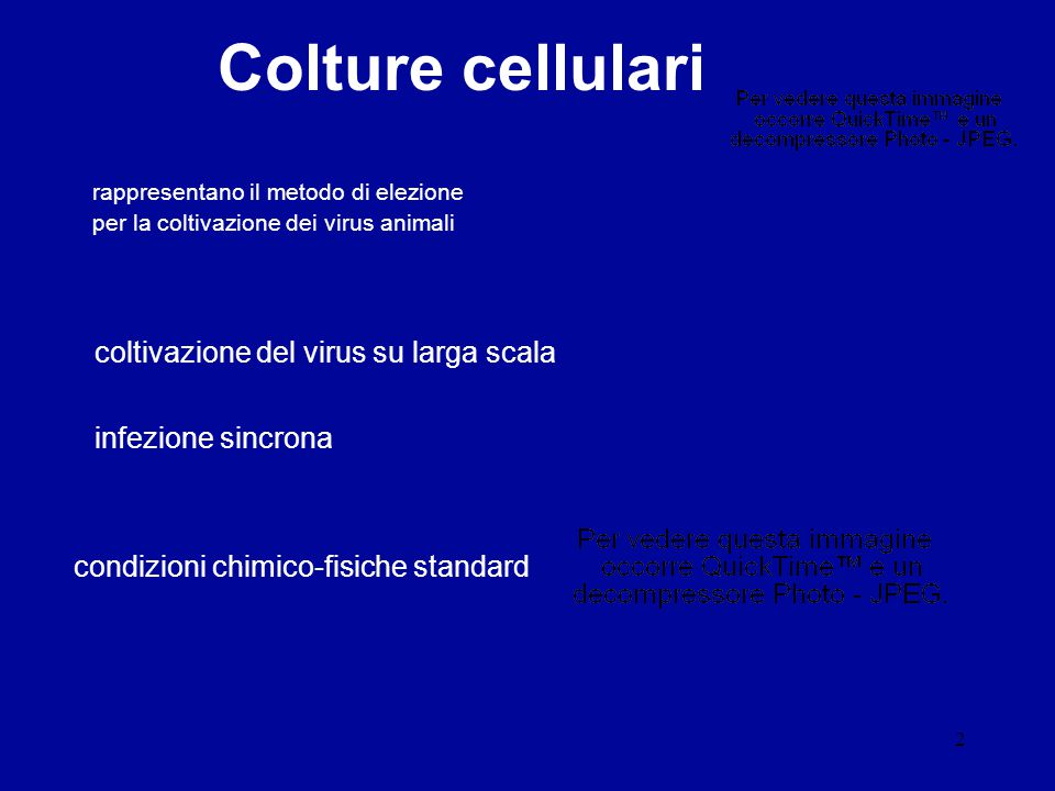 Colture cellulari coltivazione del virus su larga scala