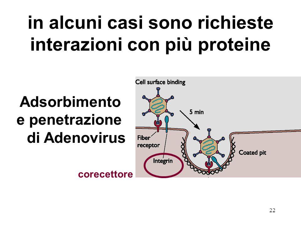 in alcuni casi sono richieste interazioni con più proteine