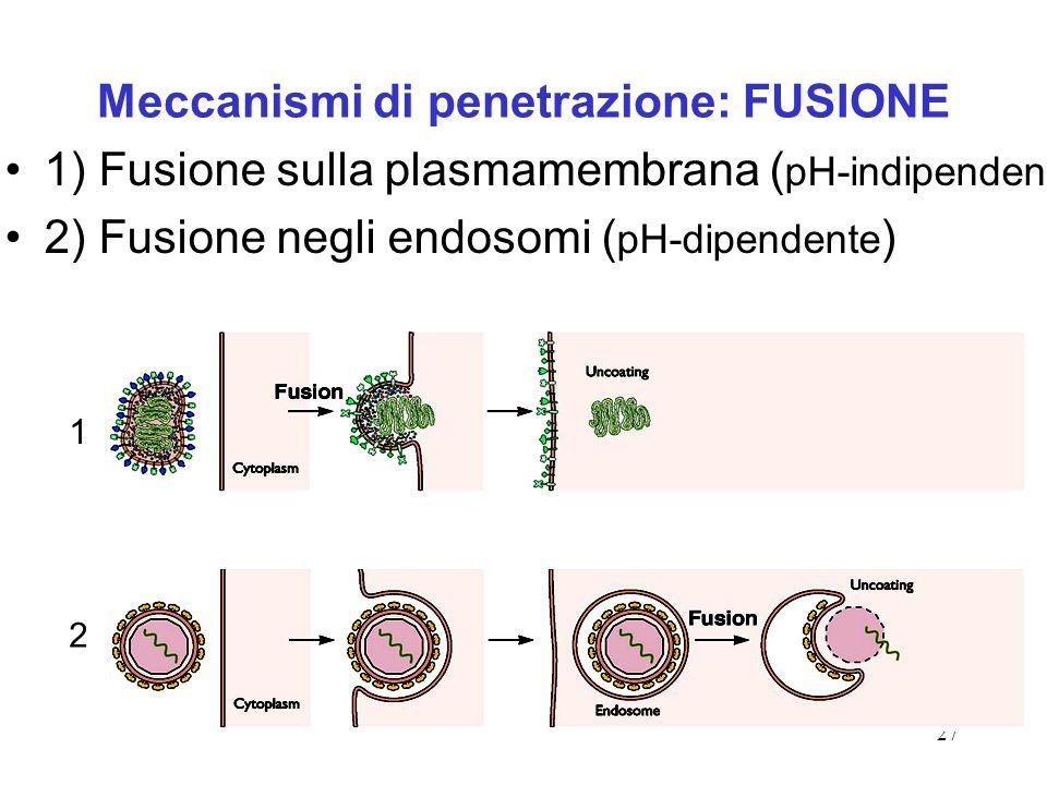 Meccanismi di penetrazione: FUSIONE