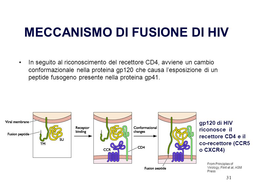 MECCANISMO DI FUSIONE DI HIV