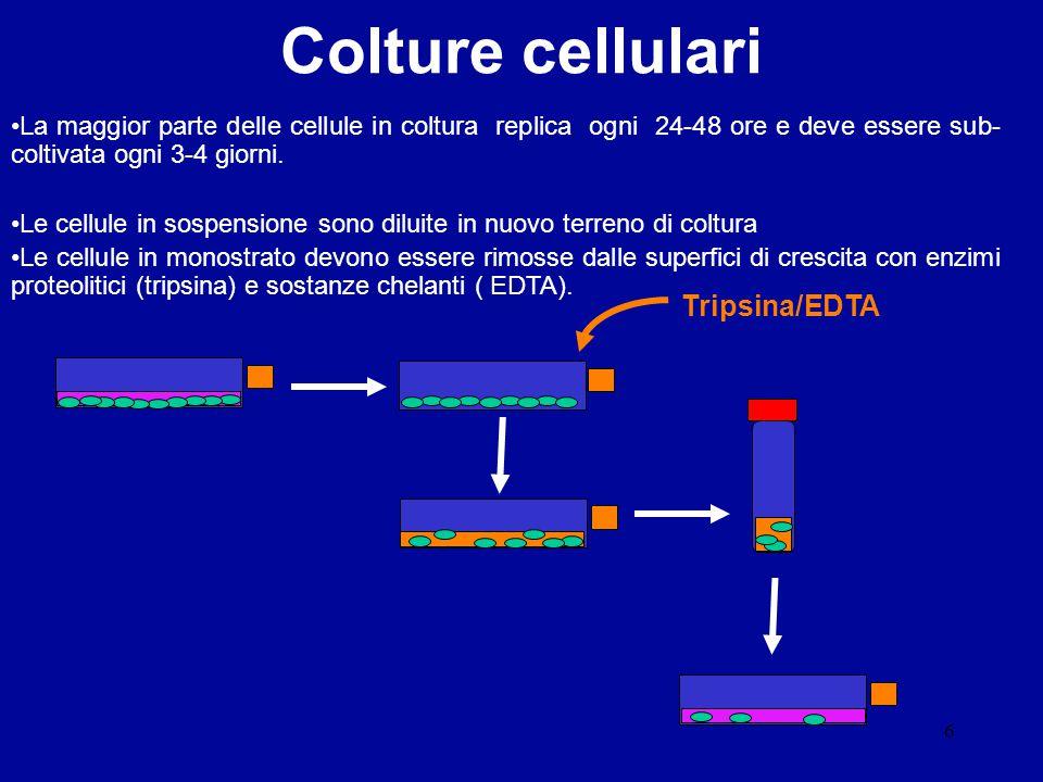 Colture cellulari Tripsina/EDTA