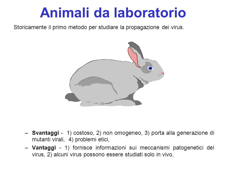 Animali da laboratorio