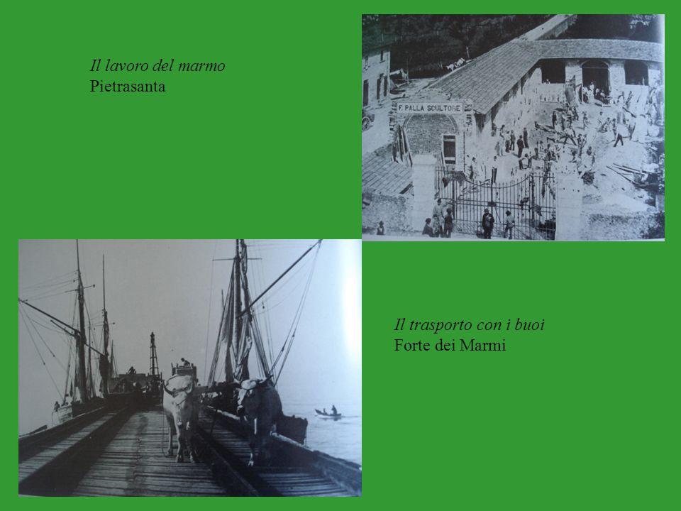 Il lavoro del marmo Pietrasanta Il trasporto con i buoi Forte dei Marmi