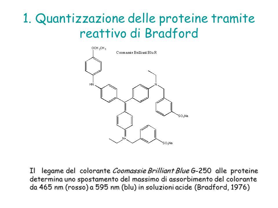 1. Quantizzazione delle proteine tramite reattivo di Bradford