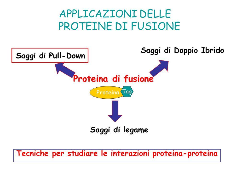 Tecniche per studiare le interazioni proteina-proteina