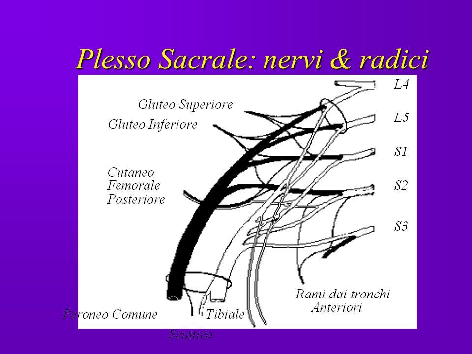 Plesso Sacrale: nervi & radici