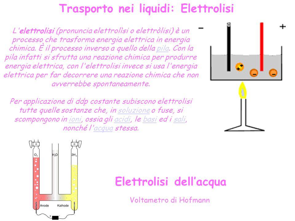 Trasporto nei liquidi: Elettrolisi Elettrolisi dell'acqua