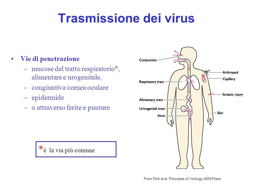 Trasmissione dei virus