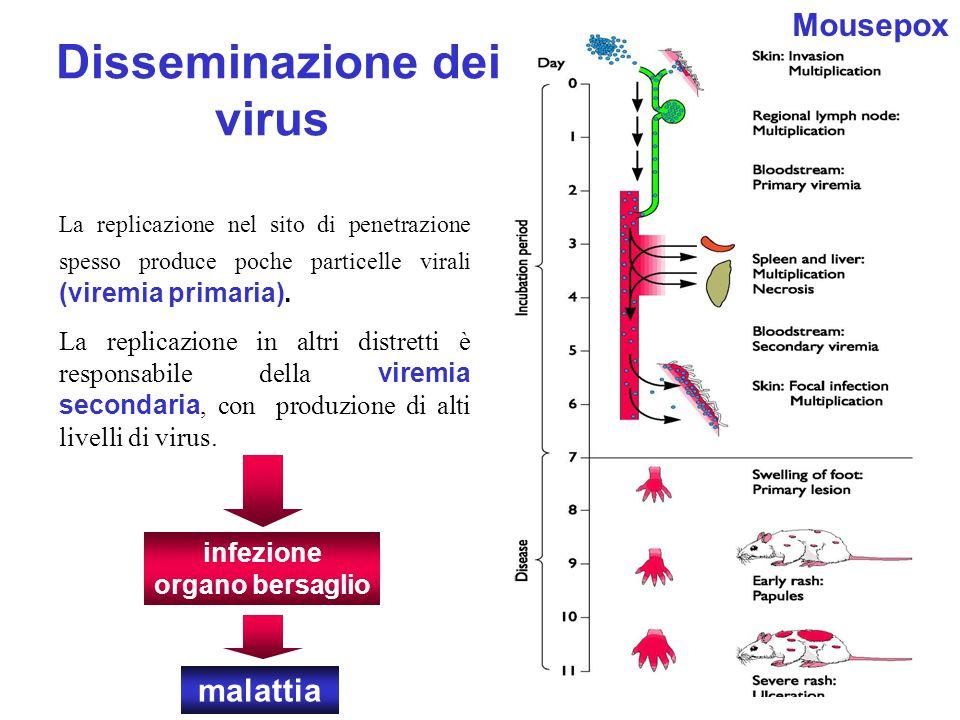 Disseminazione dei virus