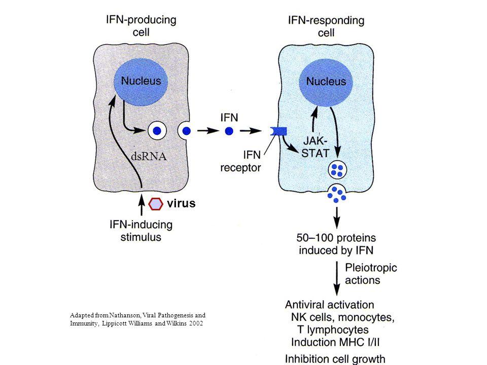 dsRNA virus.