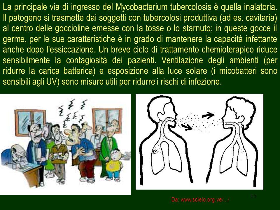 La principale via di ingresso del Mycobacterium tubercolosis è quella inalatoria. Il patogeno si trasmette dai soggetti con tubercolosi produttiva (ad es. cavitaria) al centro delle goccioline emesse con la tosse o lo starnuto; in queste gocce il germe, per le sue caratteristiche è in grado di mantenere la capacità infettante anche dopo l essiccazione. Un breve ciclo di trattamento chemioterapico riduce sensibilmente la contagiosità dei pazienti. Ventilazione degli ambienti (per ridurre la carica batterica) e esposizione alla luce solare (i micobatteri sono sensibili agli UV) sono misure utili per ridurre i rischi di infezione.