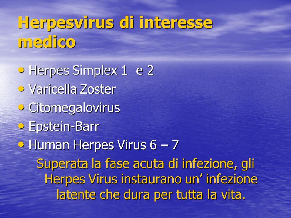 Herpesvirus di interesse medico