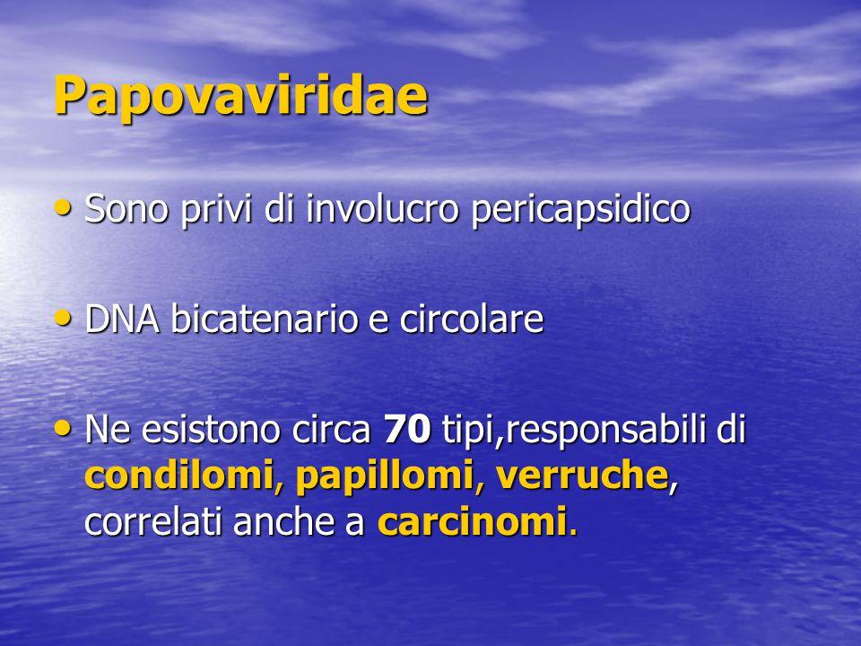 Papovaviridae Sono privi di involucro pericapsidico