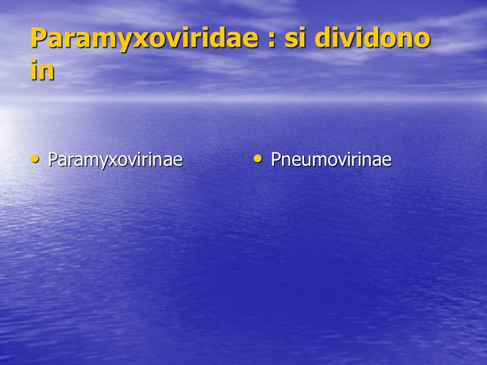 Paramyxoviridae : si dividono in