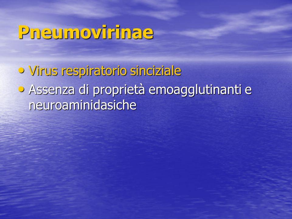 Pneumovirinae Virus respiratorio sinciziale