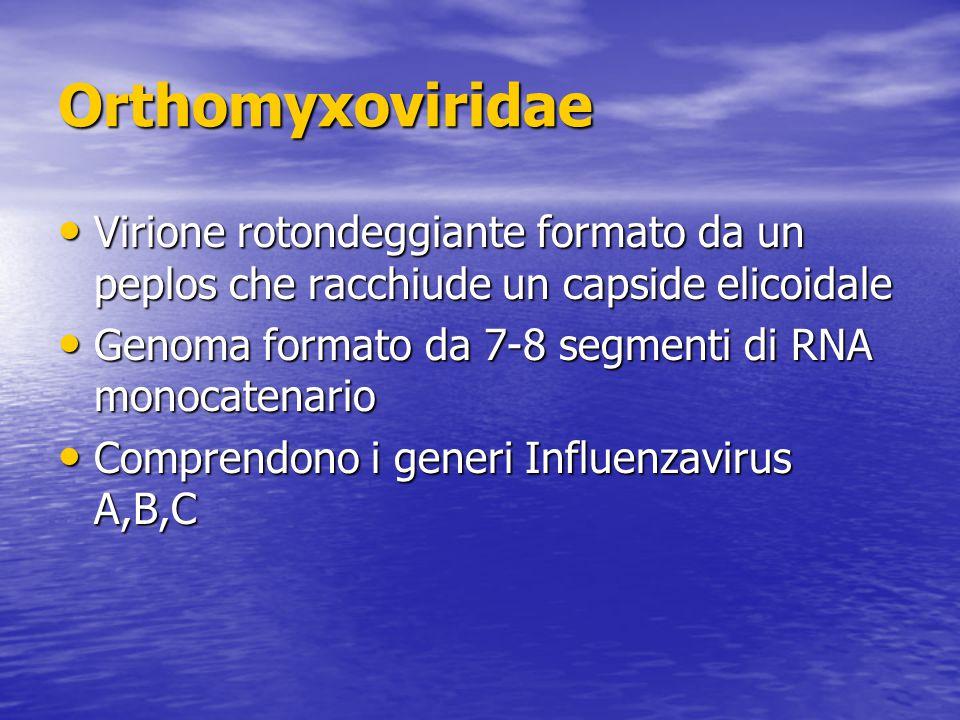 Orthomyxoviridae Virione rotondeggiante formato da un peplos che racchiude un capside elicoidale.