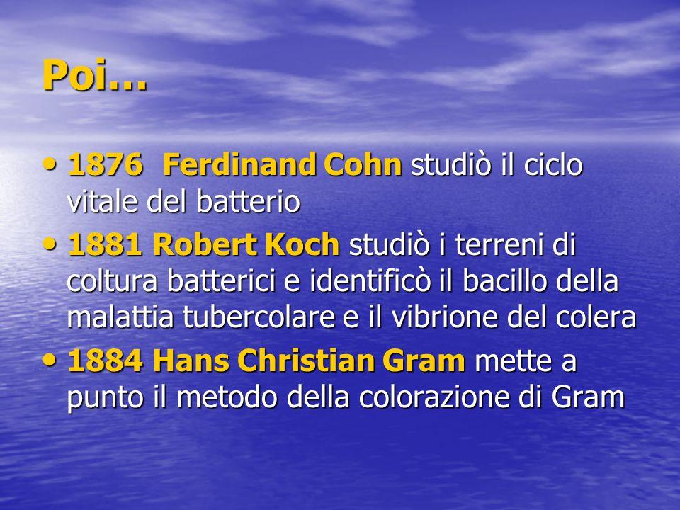Poi… 1876 Ferdinand Cohn studiò il ciclo vitale del batterio