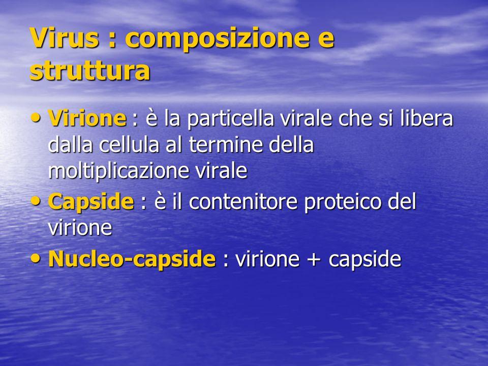 Virus : composizione e struttura