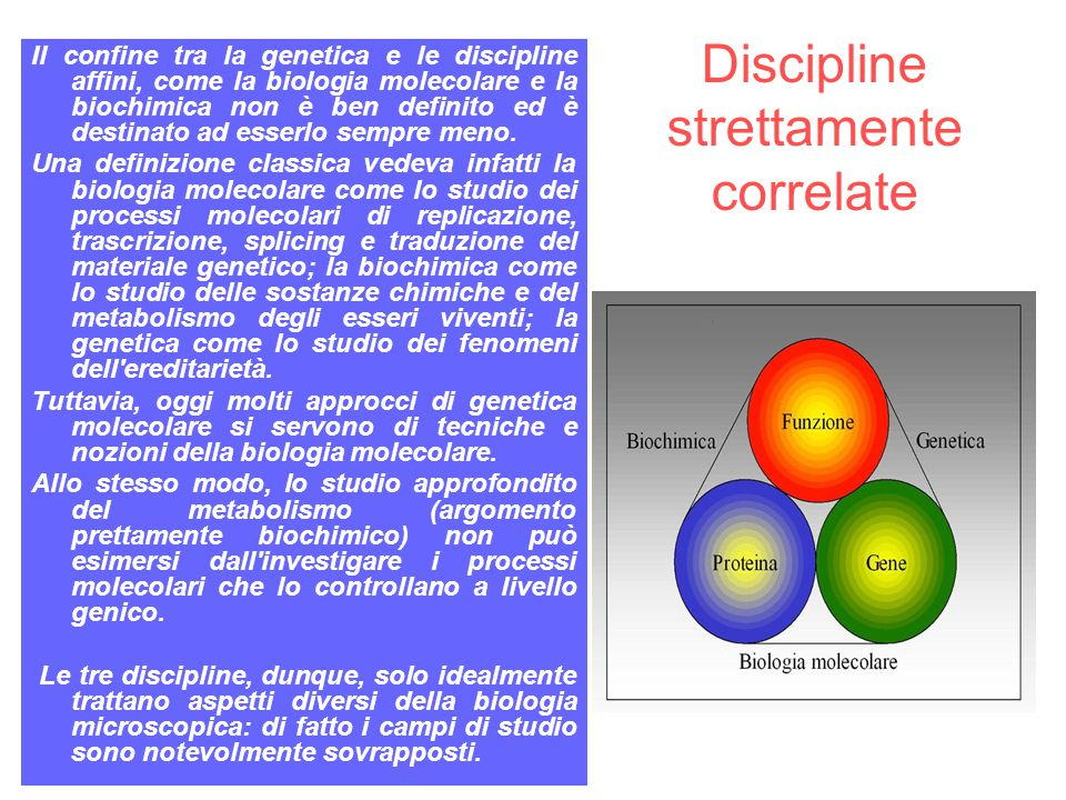 Discipline strettamente correlate
