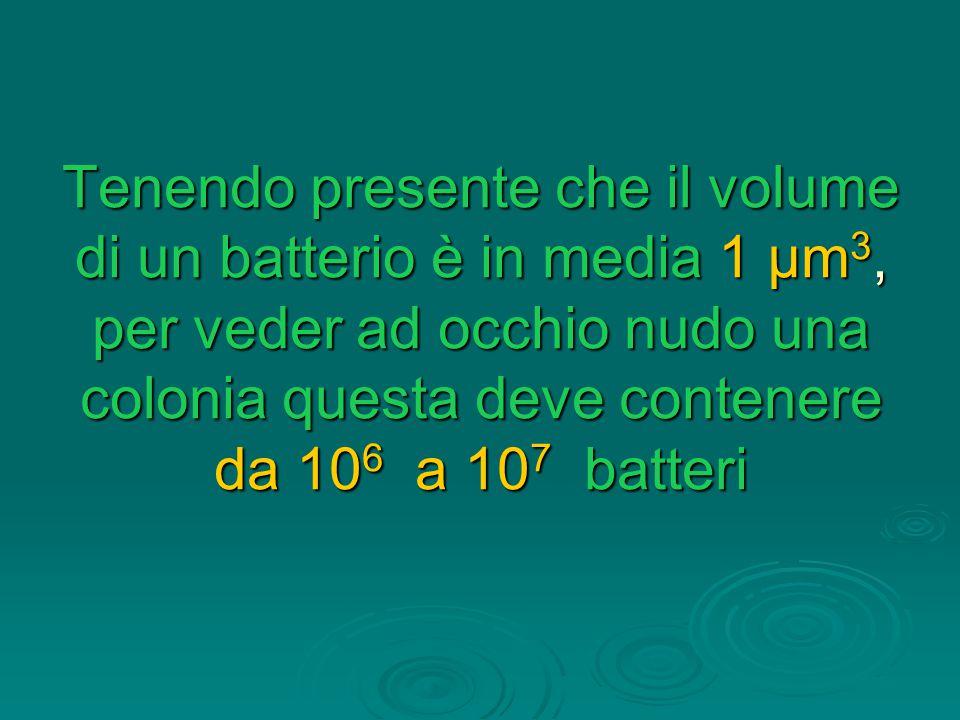 Tenendo presente che il volume di un batterio è in media 1 μm3, per veder ad occhio nudo una colonia questa deve contenere da 106 a 107 batteri