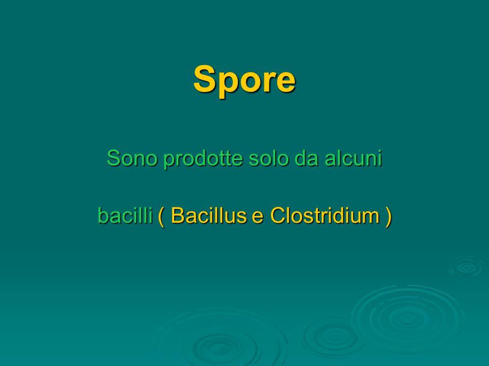Sono prodotte solo da alcuni bacilli ( Bacillus e Clostridium )