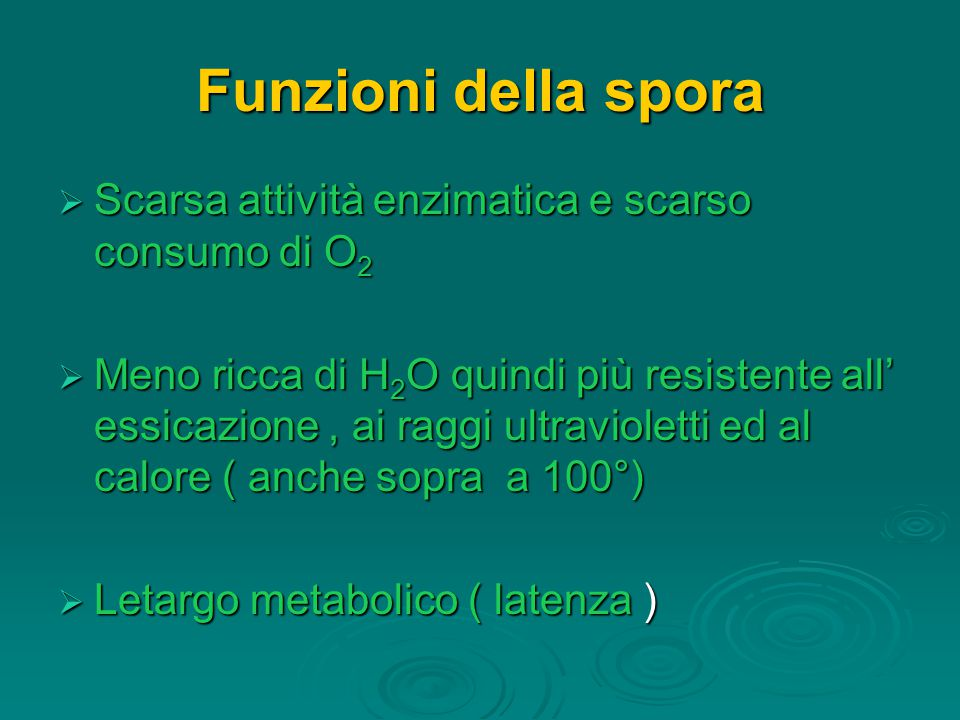 Funzioni della spora Scarsa attività enzimatica e scarso consumo di O2